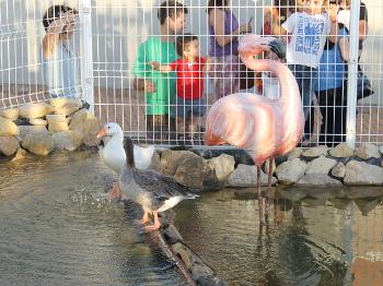 ecoparque_flamingo
